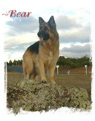 ~ Bear. Owners Chris & Arthur