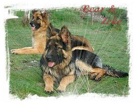 ~ Bear & ~ Zeke. Owners- Chris & Arthur